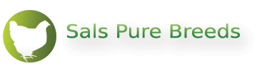 Sals Pure Breeds | Poultry breeders | Hatching Eggs | Monmouthshire | South Wales - Breeders of high quality poultry and hatching egg suppliers