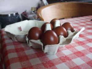 Dark Brown eggs