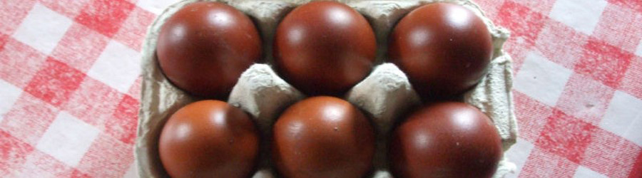 Stunning dark brown eggs